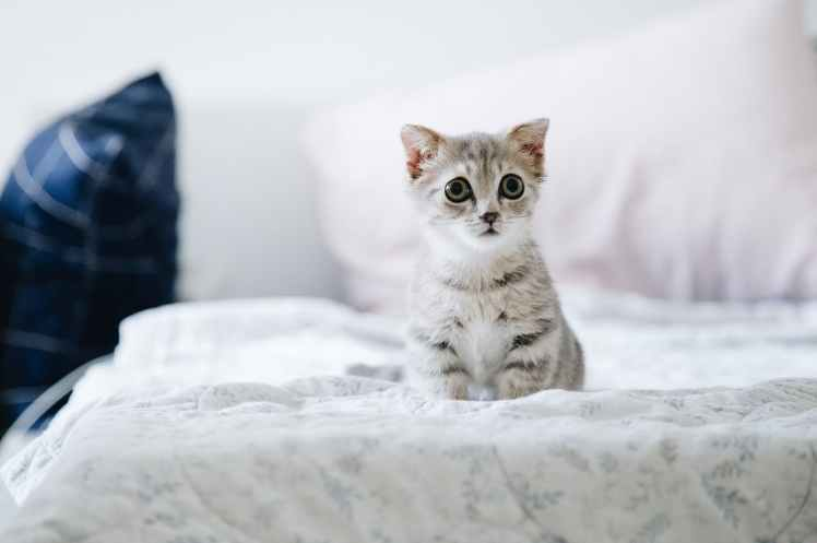 gray and white kitten on white bed
